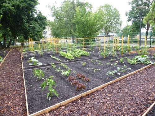 Accompagnement à la création d'un jardin collectif
